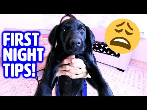 First Night with NEW PUPPY!  How to Survive Your First Day Home
