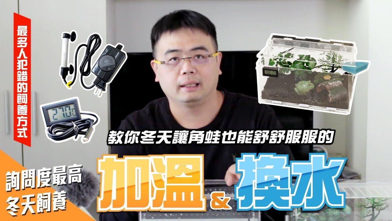 詢問度最高!如何幫角蛙加溫與換水?讓你的角蛙舒服過冬!【PACMAN TAIWAN】