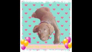 Meet my new puppy Roxy