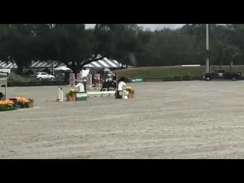Franklin - $7500 Adult Jumper Classic HITS Ocala