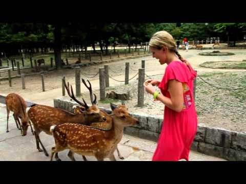 Deer attack in Nara Park