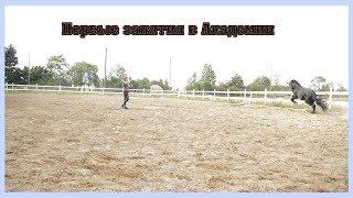 Wester Фризская лошадь. конный блог.