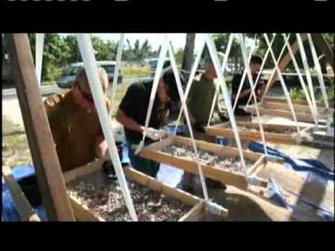 Battle of Tarawa Remembered Part 2