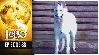 Lobo - Episode 88