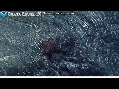 Okeanos Winslow Complex in the Phoenix Islands Protected Area