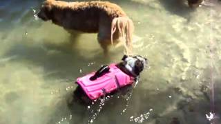 Roxy swimming