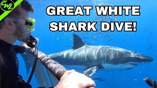 GREAT WHITE SHARK DIVE!!!(500K SUBSCRIBER SPECIAL)