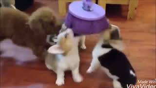Funniest    Dogs and    Cats   Funny Pet Animals' Life Videos   360p
