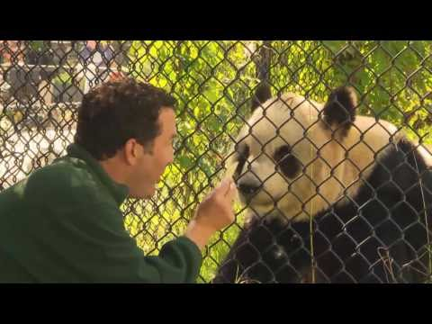 RMR: Rick and Giant Pandas