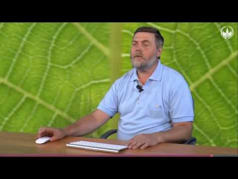 Вопрос: Что такое фотодыхание (у растений)?