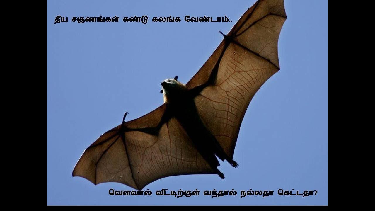 Download வெளவால் வீட்டிற்குள் வந்தால் நல்லதா கெட்டதா/பலன்கள்.BAT FACTS & BELIEFS