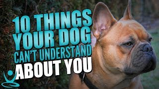 Gambar cover 🐶 10 Things Your Dog Can't Understand About You 🎵🎥