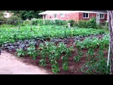 Organic Gardening: Urban Farming Detroit