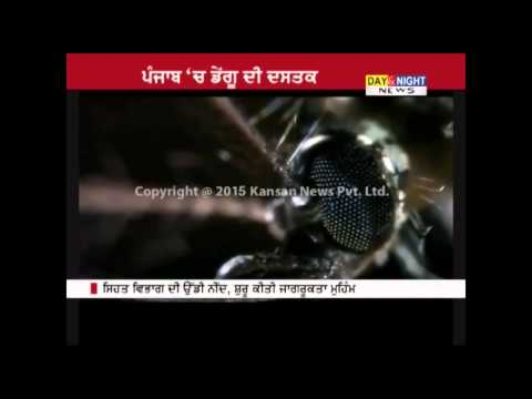 Dengue danger after rainfall, one patient detected in Ludhiana