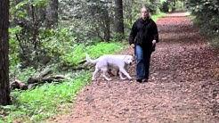 Hundetrainer vor Ort - Die mobile Hundeschule! Informationen über uns und unsere Arbeit