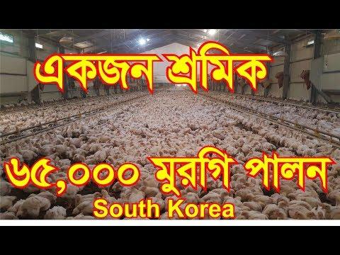 সোনালি/ব্রয়লার মুরগি পালন সঠিক পদ্ধতি,কোরিয়া   Complete guide for chicken farm (Documentary)