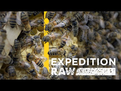 Would You Walk Into a Room With Millions of Bees? | Expedition Raw