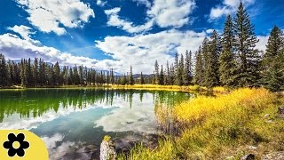 Shamanic Meditation Music, Relaxing Music, Calming, Stress Relief Music, Peaceful Music, ✿3122C