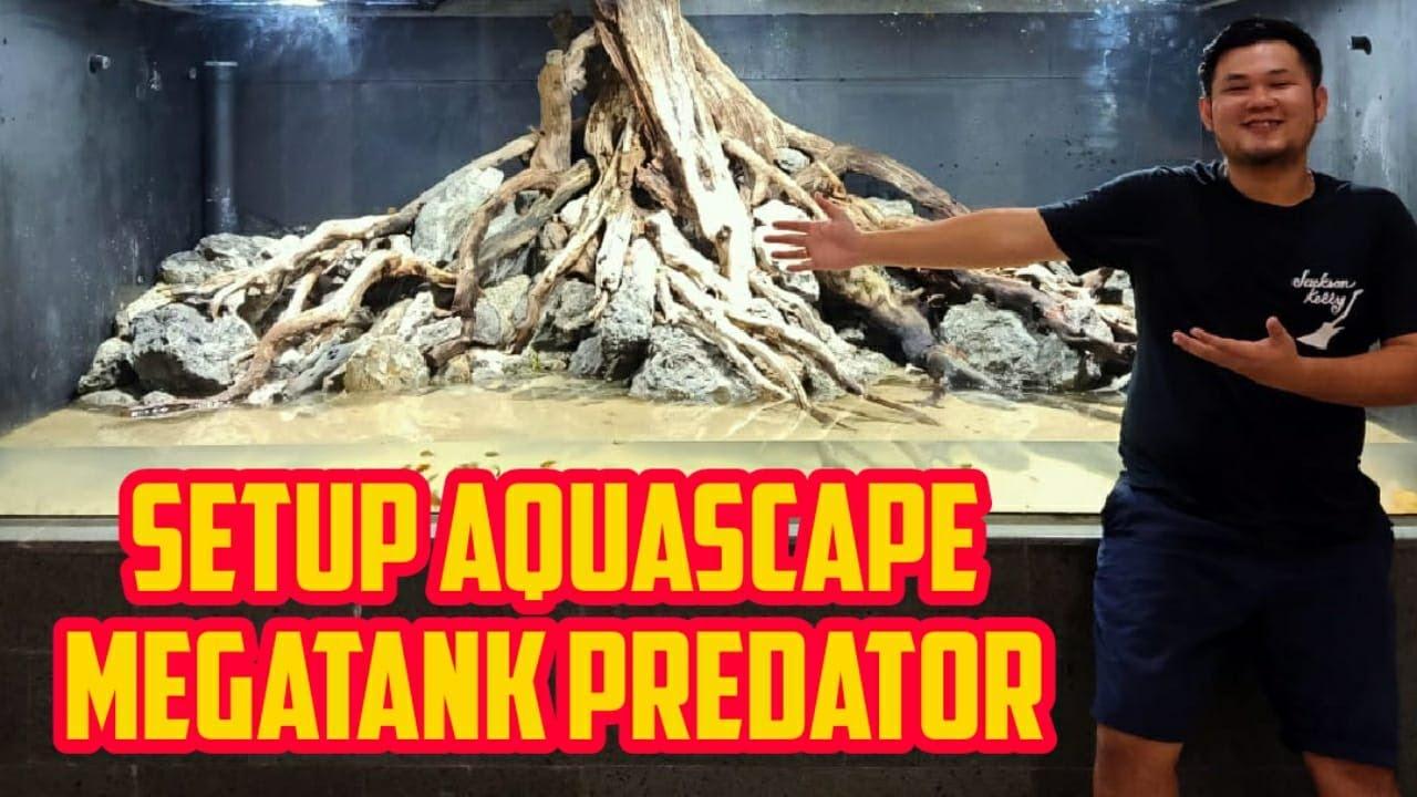 Setup Aquascape Megatank Ikan Predator Project The Aquatic Freak Fish And Furious Youtube