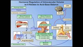 Metabolic Alkalosis (ABG Interpretation - Lesson 10)
