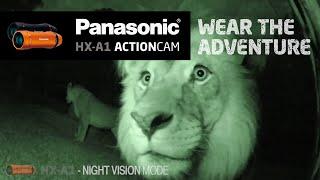 panasonic hx a1 night vision sample footage shot at mogo zoo