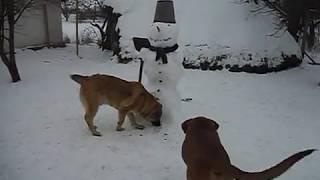 Мамай но не из Физрука это кличка собаки Азиата показывает охранные качества