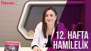 Parents TV - 12. Hafta Hamilelik