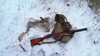 Охота на зайца по следу зимой