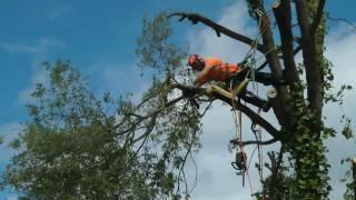 Tree Cutting. Tree Surgeon. Climbing Arborist