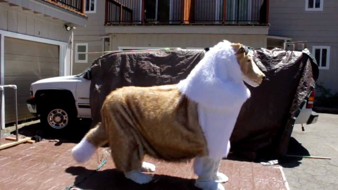 Showing off the dog costume movements : horse costume two person  - Germanpascual.Com
