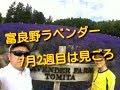 富良野 ラベンダー 最盛期 の動画、YouTube動画。