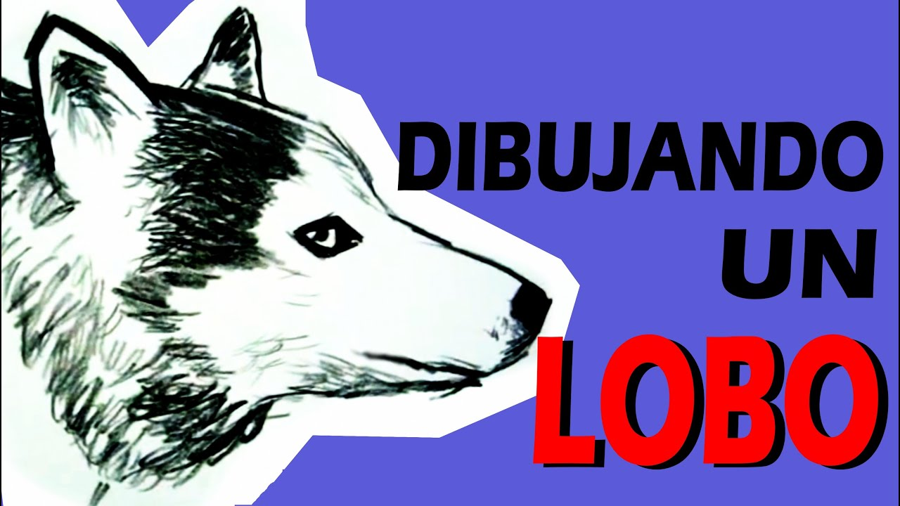 DIBUJANDO A UN LOBO - DRAWING A WOLF - YouTube