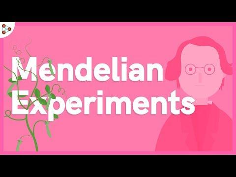 Genetics - Mendelian Experiments - Lesson 2