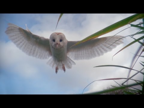 Dial-an-owl - Super Senses: The Secret Power of Animals: Episode 2 - BBC Two