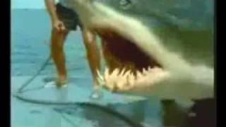 Repeat youtube video Squalo si mangia pescatore.wmv