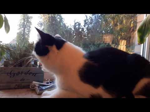 Cat growls, hisses and attacks