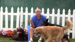 Command That Can Save Your Dogs Life! (stop In Motion)
