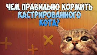 ВЕРНАЯ ДИЕТА ДЛЯ КАСТРИРОВАННОГО КОТА! НЕ ДОПУСТИТЕ ОЖИРЕНИЕ!