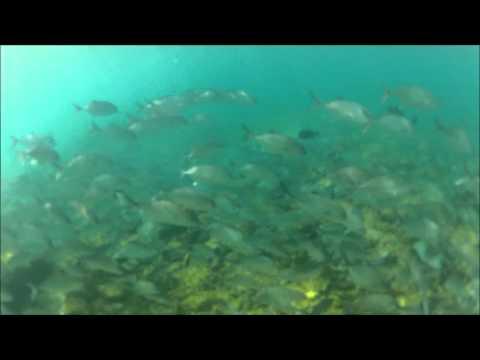 Flying Fish Cove