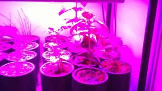 Sunshine Systems Glowpanel 45 Led Grow Light Seed Starting Shelf