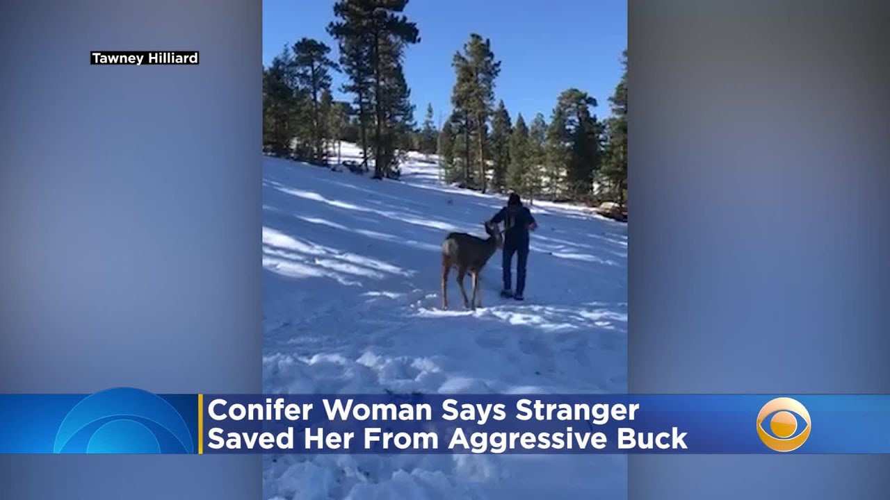 'Truly Scary Situation': Conifer Woman Says Stranger Saved Her From Aggressive Buck