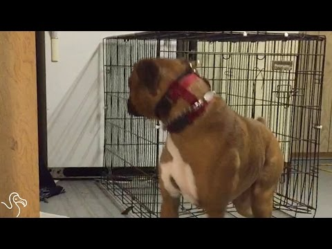Dog's Owners Finally Figure Out How He Keeps Escaping