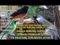 Pasar Burung Bratang Surabaya Harga Burung Ocehan Super Terbaru  Mp3 - Mp4 Download