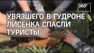 Маленького лиса спасли на Урале