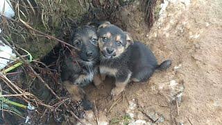 Щенячьи лесные норы. Собака прячет потомство в лесу, охотится на котят и отбивается от хищников!