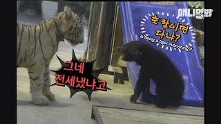 놀이터에서 흔히 볼 수 있는 광경 ㅣ Baby Bear VS Baby Tiger, Who'll Be The Winner?