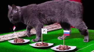 Мо Салах се завръща на терена и може би ще направи чудо - предсказа котето ВладИмир