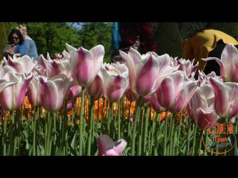 Tour Company - Guided tour to Keukenhof and Flowerfields from Amsterdam