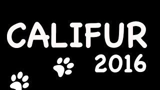 Califur 2016