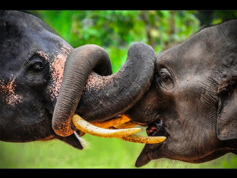 Wildlife in Thailand - Documentary Films